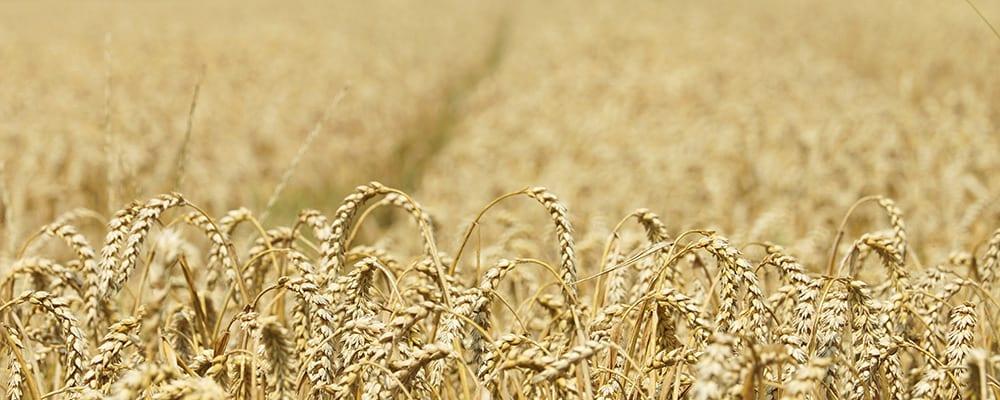 Landwirtschaftsrecht Agrarrecht Höferecht Sankt Augustin